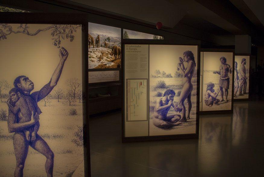 Detalle del museo de Altamira