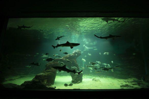 Detalle acuario